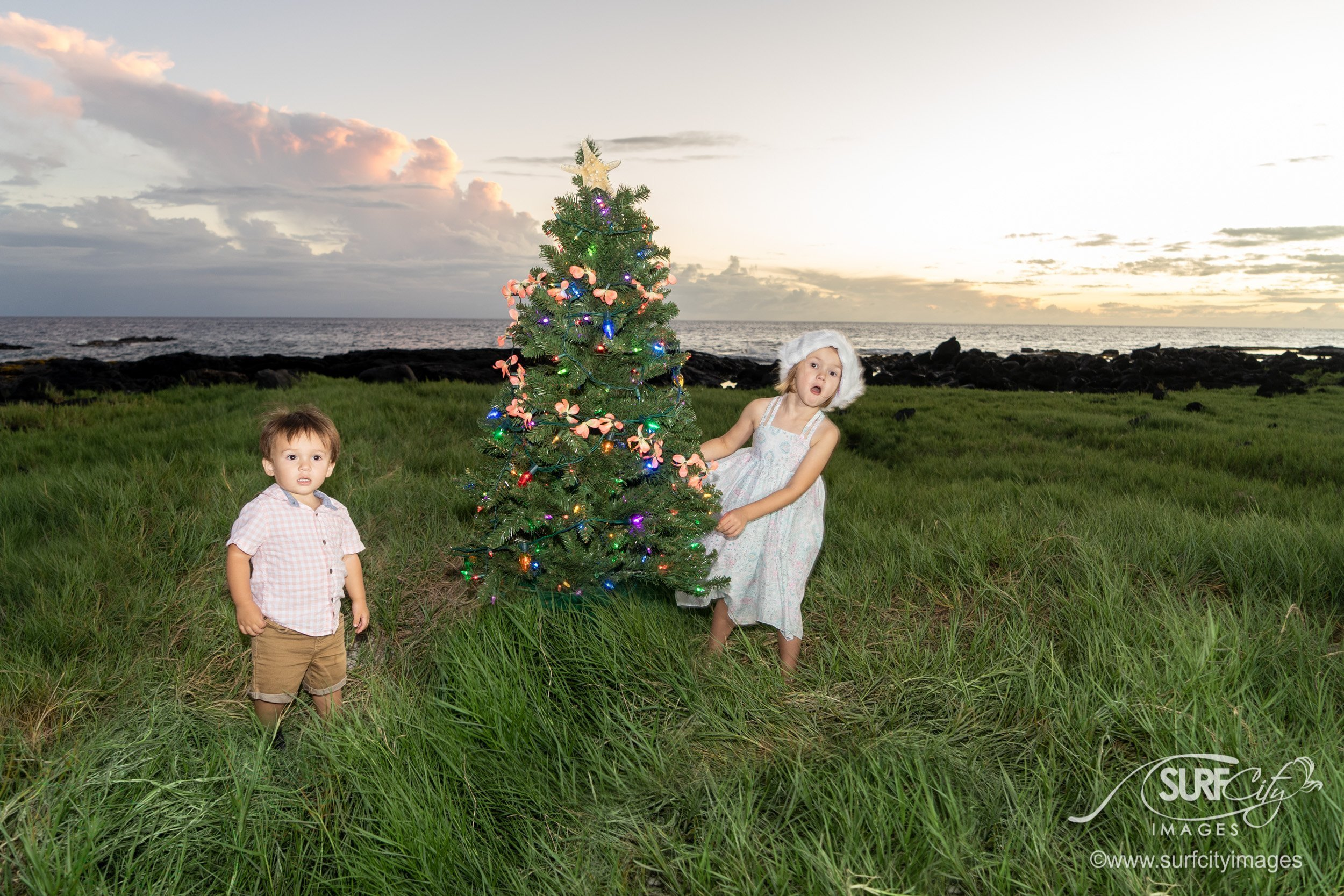 Hawaii Christmas Tree Photos